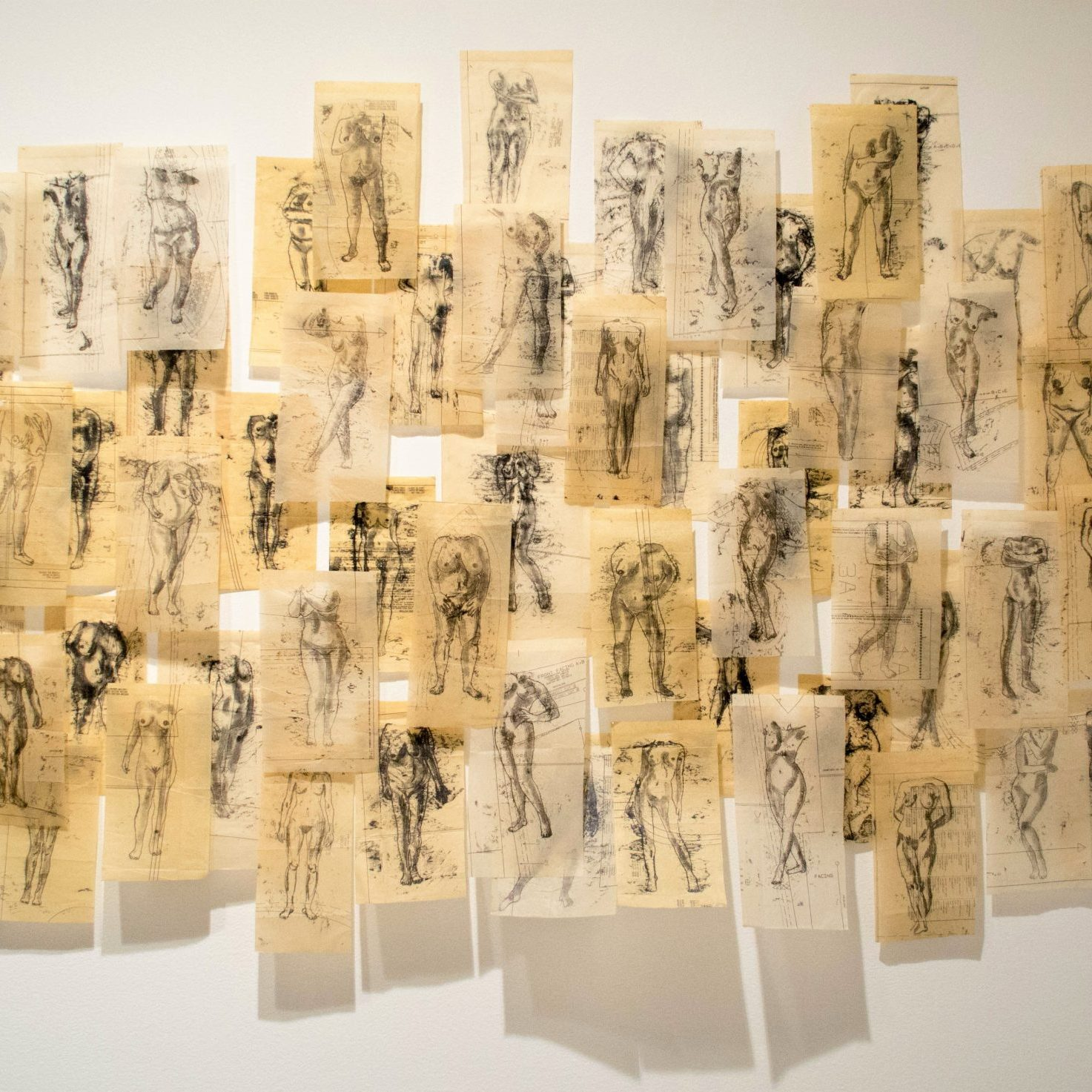 Approximately 30 pieces of tan paper with sketches of nude figures created with black pen on dress makers paper are hung next to each other on the wall